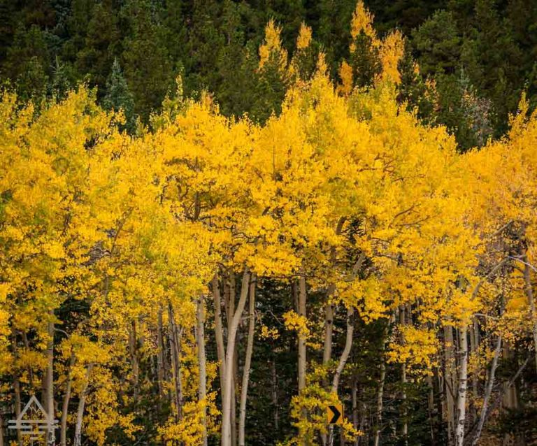 rocky-mountain-national-park-leaves-trip