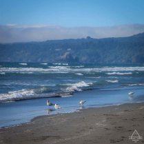Northern California Beach with Fog